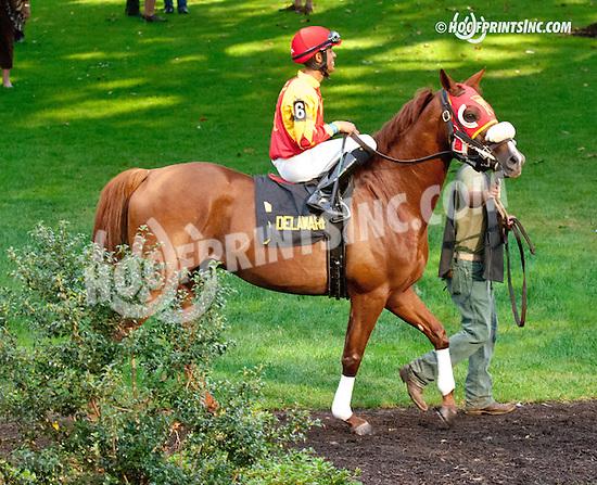 Sand Blastt  beforeThe Bob Magness Memorial Arabian Derby (gr 2) at Delaware Park on 9/2/13