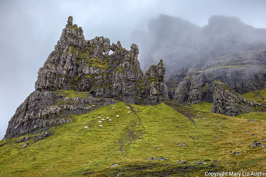 Isle of Skye, Scotland: A herd of sheep graze at the base of Needle Rock with fog swirling around the Storr formations.