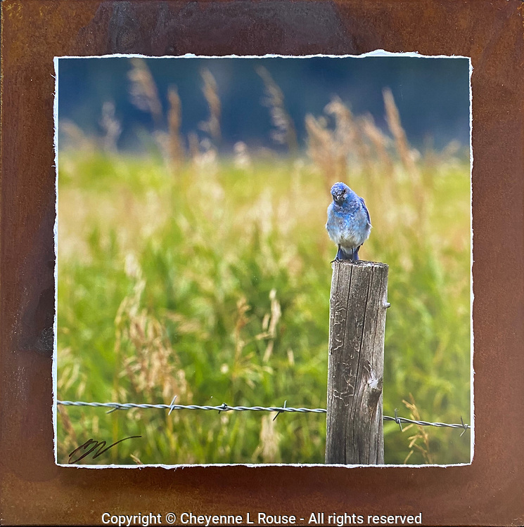 Bluebird of Happiness - Mixed Media - Wyoming<br />
