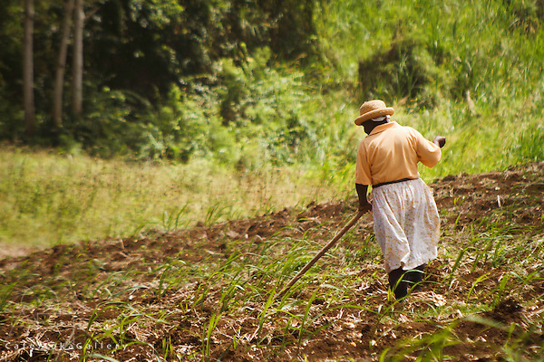 Barbados - Women working in a cane field - Easy Hall plantation