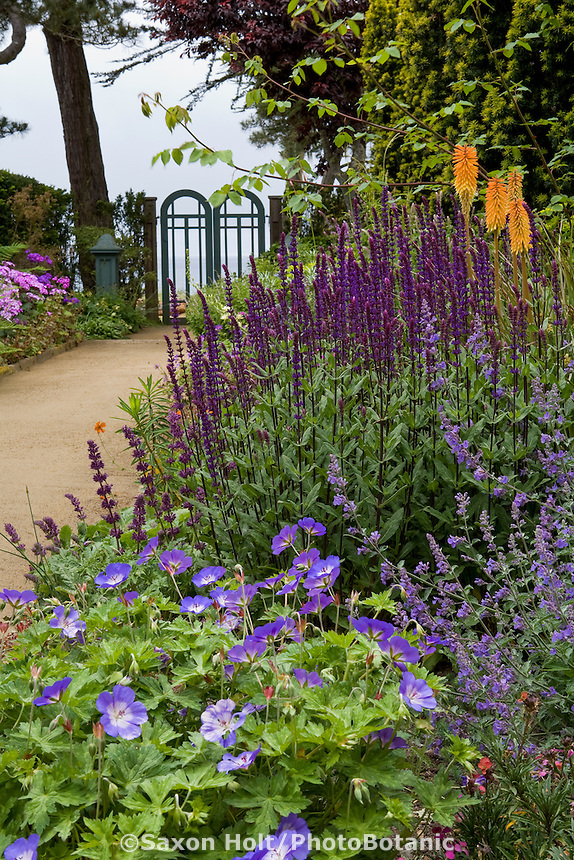 Blue flowering perennial garden by path leading to gate and ocean view in California coastal garden