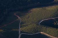Manhuacu_MG, Brasil...Imagem aerea de uma plantacao de eucalipto em Manhuacu, Minas Gerais...Aerial view of eucalyptus plantation in Manhuacu, Minas Gerais...FOTO: BRUNO MAGALHAES /  NITRO