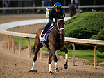 LOUISVILLE, KY - MAY 02: Sassy Sienna gallops in preparation for the Kentucky Oaks at Churchill Downs on May 2, 2018 in Louisville, Kentucky. (Photo by Alex Evers/Eclipse Sportswire/Getty Images)