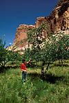 UT: Utah; Capitol Reef National Park, Old fruit orchard       .Photo Copyright: Lee Foster, lee@fostertravel.com, www.fostertravel.com, (510) 549-2202.Image: utcapi209.