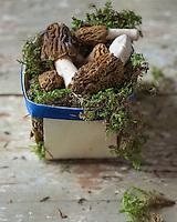 Gastronomie: Morilles sauvages  / Gastronomy: wild morels - Stylisme : Valérie LHOMME