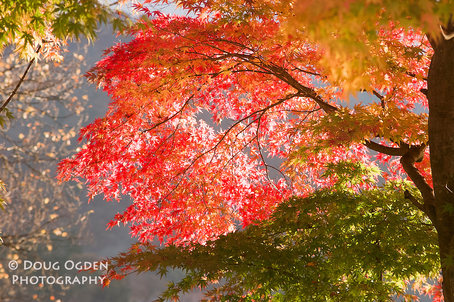 Fall foliage, Lake Chuzenji, Nikko, Japan