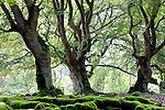 Europa, DEU, Deutschland, Hessen, Kellerwald, Albertshauen, Naturpark Kellerwald-Edersee, Halloh, Hutewald, , Kategorien und Themen, Natur, Umwelt, Landschaft, Jahreszeiten, Stimmungen, Landschaftsfotografie, Landschaften, Landschaftsphoto, Landschaftsphotographie, Tourismus, Touristik, Touristisch, Touristisches, Urlaub, Reisen, Reisen, Ferien, Urlaubsreise, Freizeit, Reise, Reiseziele, Ferienziele....[Fuer die Nutzung gelten die jeweils gueltigen Allgemeinen Liefer-und Geschaeftsbedingungen. Nutzung nur gegen Verwendungsmeldung und Nachweis. Download der AGB unter http://www.image-box.com oder werden auf Anfrage zugesendet. Freigabe ist vorher erforderlich. Jede Nutzung des Fotos ist honorarpflichtig gemaess derzeit gueltiger MFM Liste - Kontakt, Uwe Schmid-Fotografie, Duisburg, Tel. (+49).2065.677997, archiv@image-box.com, www.image-box.com]