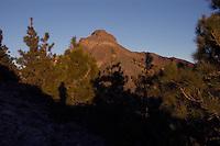 Shadows on mountain and pine trees, Parque nacional de Teide, Tenerife, Canary Islands,
