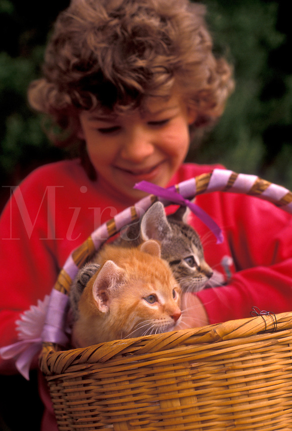 AJ3477, girl, child, kitten, cat, A young 5 year old girl holds a basket of two adorable kittens (5-6 weeks old) on her lag in Exton in the state of Pennsylvania.
