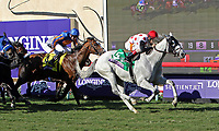 DEL MAR, CA - NOVEMBER 04: World Approval #5, ridden by John Velazquez, pulls ahead during the Breeders' Cup Mile race on Day 2 of the 2017 Breeders' Cup World Championships at Del Mar Racing Club on November 4, 2017 in Del Mar, California. (Photo by Sue Kawczynski/Eclipse Sportswire/Breeders Cup)