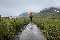 Hiker hiking in rain through grass in Tjäktjavagge near Sälka hut, Kungsleden trail, Lapland, Sweden