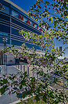 14 April 2013: Cherry blossoms are in bloom outside Nationals Park prior to a game between the Atlanta Braves and the Washington Nationals at Nationals Park in Washington, DC. The Braves shut out the Nationals 9-0 to sweep their 3-game series. Mandatory Credit: Ed Wolfstein Photo *** RAW (NEF) Image File Available ***