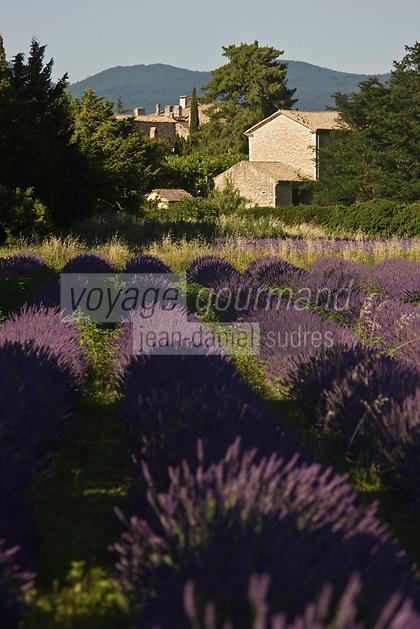 Europe/France/Rhône-Alpes/26/Drôme/Grignan: Champ de lavande et Habitat provençal