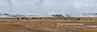 67545-09018 Bison near Midway Geyser Basin, Yellowstone National Park, WY