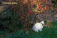 SH13-007z   Pet Rabbit - Dwarf