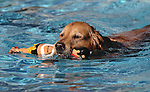 Lexi enjoys the second annual Pooch Plunge at the Carson City Aquatic Center in Carson City, Nev., on Saturday, Sept. 18, 2010..Photo by Cathleen Allison