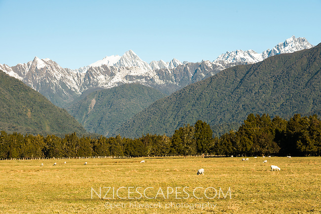 Farming under winter Southern Alps, Westland Tai Poutini National Park, UNESCO World Heritage Area, West Coast, New Zealand, NZ