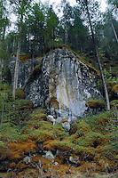 Moss covered forest area showing bare rock amongst the trees. Stuibenfall, Otztal, Tyrol/Tirol Austria