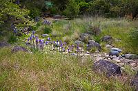 Spring meadow garden with rock lined dry creek as rain garden, bioswale,