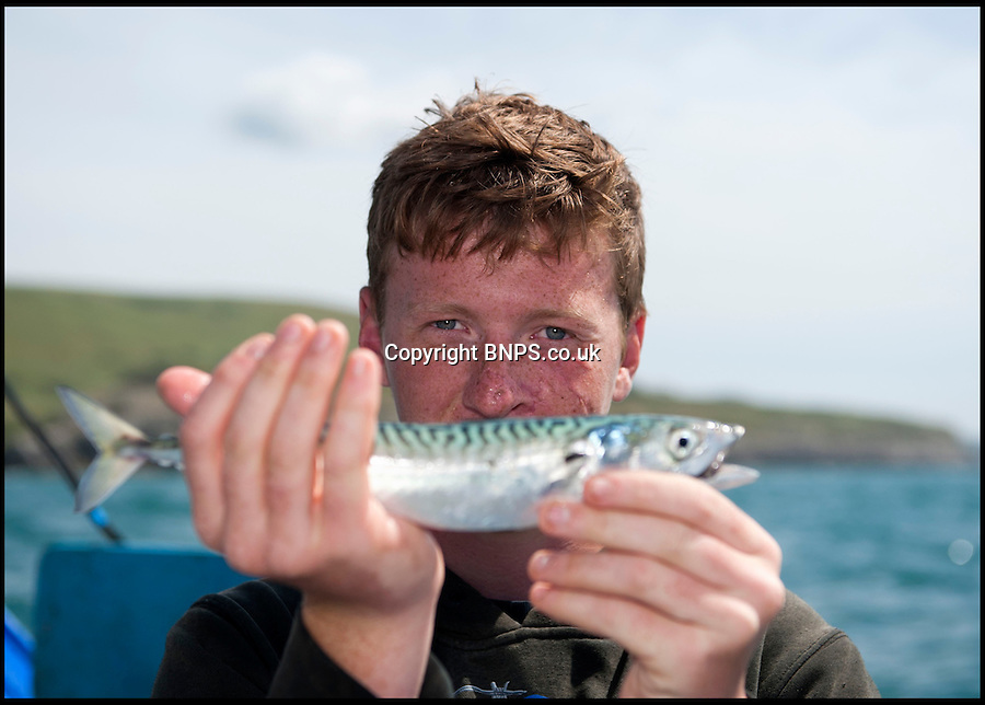 BNPS.co.uk (01202) 558833<br /> Picture: Peter Willows<br /> <br /> All at sea - In a fast changing world the Dorset fishing family still going strong after 350 years.<br /> <br /> Young Levi Miller is ensuring the survival of his family's 350-year-old seafaring tradition - by becoming it's tenth generation of Dorset fisherman. The 16-year-old's ancestors have been fishing off the Dorset coast since Henry Miller first set sail in the 1670s. <br /> <br /> Levi has now become the latest family member to choose a life on the waves and has begun learning the trade onboard his father's fishing boat. Levi got hooked on fishing as a child and despite only just finishing school, he says there is nowhere else he would rather be than hauling in fish alongside his dad and to play his own part in his family's historic trade.