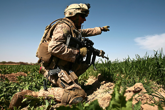The Taliban attack is the second in as many days that Marines of Company L, 3rd Battalion, 6th Marine Regiment have come under during a three-day mission near Marjah, Afghanistan. Staff Sgt. Christopher Whitman, 28, of Clearwater, Fla. points out the Taliban position and yells for his men to advance on it. March 11, 2011. DREW BROWN/STARS AND STRIPES