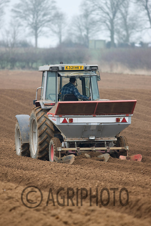 Potato planting Lincolnshire.Picture Tim Scrivener date taken 13th March 2012 Mobile 07850 303986 e-mail tim@agriphoto.com. ....covering agriculture in the Uk....