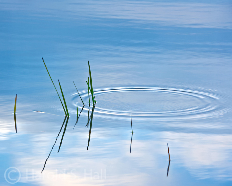 Water rings, or ripples on the calm surface of Lake Placid, New York.