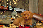 Nova Scotia Duck Tolling Retriever Shopping cart has 3 Tabs:<br />