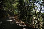 Hikers track through the Laura forest Parque nacional de Garajonay, La Gomera, Canary Islands, Spain.