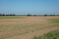 Variable establishmnet due to lack of rainfall - Lincolnshire, June