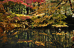 Autumn leaves, momiji, and a pond in the Japanese garden in Nanzenin, Kyoto.