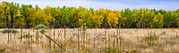 Autumn landscape panorama West Bijou Ranch short grass prairie, Strasburg Colorado; managed by Savory Institute,
