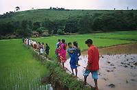 INDIA AP, Araku, Adivasi cross a rice field to their hamlet / INDIEN Adivasi gehen durch ein Reisfeld zu ihrem Dorf