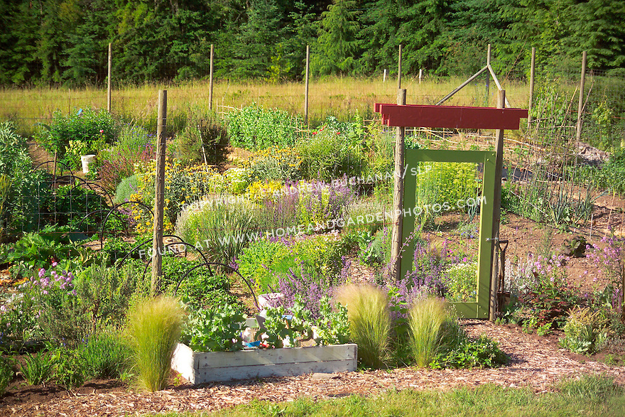 A chartreuse green painted gate and bright red lintel above dress up the entrance through an 8' wire mesh deer fence surrounding this organic kitchen garden (a modern day Victory Garden) of mixed vegetables and colorful flowering herbs on Vashon Island in Washington State's Puget Sound. Garden design by Stenn Design