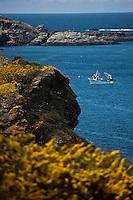Europe/France/Bretagne/56/Morbihan/ Belle-Ile-en-Mer/Sauzon: Lande d'ajoncs et Côte rocheuse à Port Puce - Caseyeur relevant ses casiers