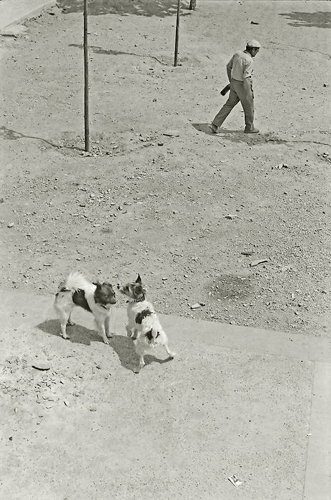 A man carries a bottle of wine across a park in Barcelona as two dogs socialise in the foreground.