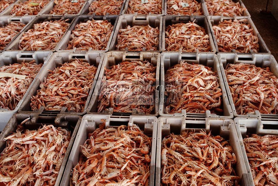 Europe/France/Bretagne/29/Finistère/Concarneau: La criée - Casiers de langoustines