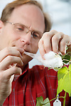 1301-03 010.CR2<br /> <br /> Josh Udall, (Plant and Wildlife Science)<br /> Cotton plant research<br /> <br /> January 10, 2013<br /> <br /> Photography by Mark A. Philbrick<br /> <br /> Copyright BYU Photo 2013<br /> All Rights Reserved<br /> photo@byu.edu  (801)422-7322