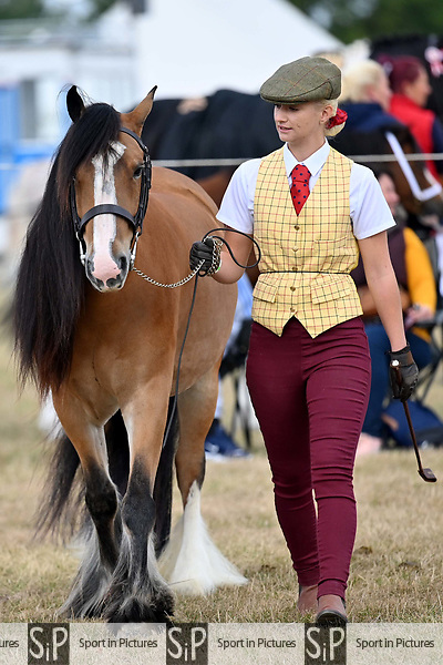 Orsett. United Kingdom. 07 September 2019. Whitmore A ring. Orsett Horticultural and agricultural show. Essex. UK.~ 07/09/2019.  MANDATORY Credit Garry Bowden/Sport in Pictures - NO UNAUTHORISED USE - 07837 394578