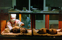 PANDA COMPLEX: CHENGDU: CHINA.Panda nurses tend to this years panda cubs late at night.  The cubs, 10 -1 2 weeks old,  are temporaily called (l to r) Xiao Jiao,  Xiao Lan, Xiao Ya and Xiao Ya-Ya have 24 hour care. The specially designed Panda Breeding Complex is a world's first with facilities for upto 12 mothers, a nursery, a breeding rooman artificial insemination facility and quarters for  staff. .Photo by Richard Jones/SINOPIX.©sinopix