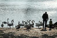 Germany, Baden-Wuerttemberg, Tauber Valley, Wertheim: Grandfather and grandchild feeding swans at river Main | Deutschland, Baden-Wuerttemberg, Region Heilbronn-Franken, am Ende des Taubertals, Wertheim: Grossvater mit Enkelkind am Main beim Schwaene fuettern