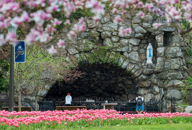 May 2, 2018; Grotto, spring 2018. Photo by Barbara Johnston/University of Notre Dame