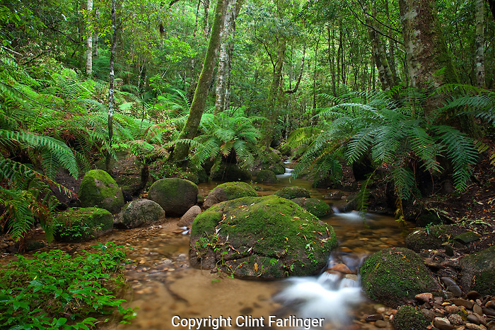 creek, Gibraltar Range National Park, New South Wales, Australia