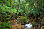 creek, Gibraltar Range National Park, New South Wales, Australia