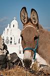 A donkey and church, Karterados (Thira), Greece