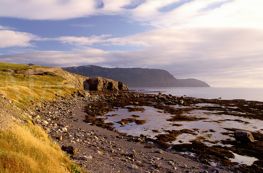 Newfoundland, NF, Canada, Rocky coastline at low tide at Rocky Harbour on the Gulf of St. Lawrence. View of Gros Morne National Park.