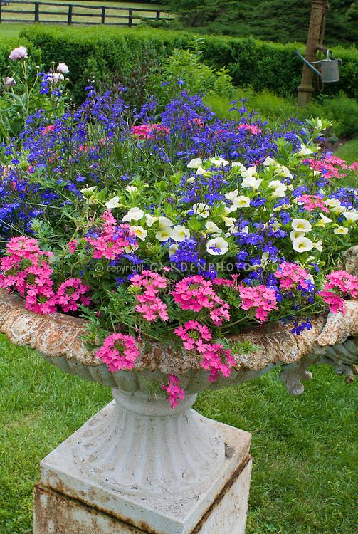 Annual Container Planter Pot Of Verbena, Lobelia Erinus, Calibrachoa  Petunias, With Rustic Feel