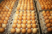Produzione di uova. Production of eggs. Allevamento. Breeding....