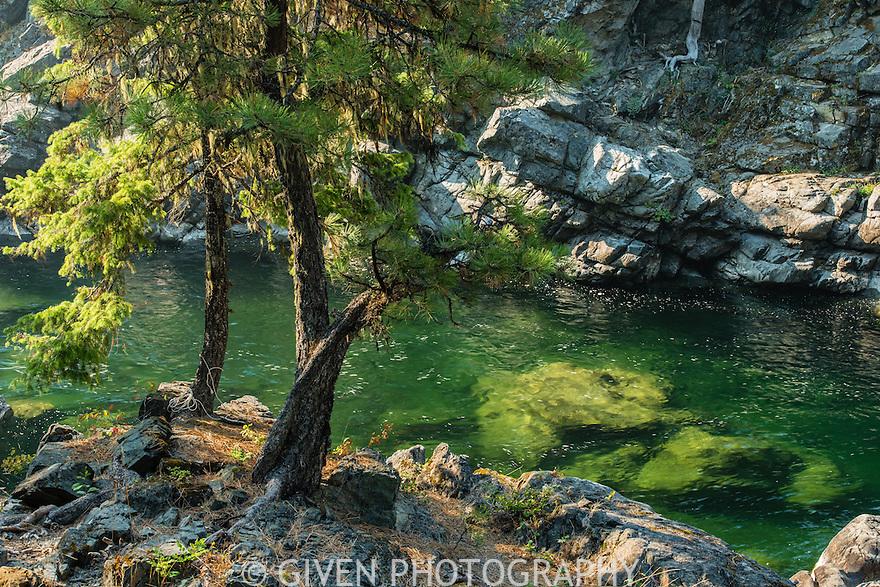 Salmon La Sac River, Washington