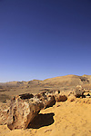 Israel, Negev, Petrified trees in the Large Crater .